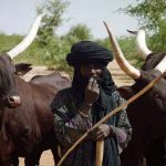 Grazing Reserves: Yoruba Youths Ask Southerners to Defend Their Lands