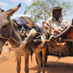 Niger Bans Export of Donkeys as Demand from Asia Rises