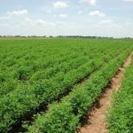 W/Africa Agric Programme threatens to stop funding Nigerian institutions