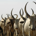 Herdsmen: South-East Monarchs Advocate Establishment Of Cattle Ranches