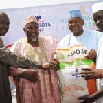 Food Security: Dangote Launches 8000 Hectares of Rice Outgrowers Scheme