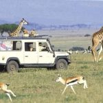 Kenya's Tourism Revenue Plummets Amid COVID-19