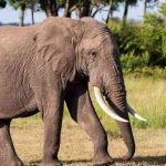Zimbabwe Sends Elephants Samples To Advanced Labs in US, UK