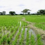 Bumper Season As 600,000 Adamawa Farmers Enjoy FG Fertilizer Subsidy Scheme