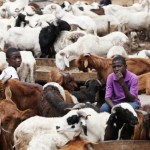 SALLAH: Ram Sellers, Traders Groan Over Poor Economy